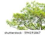 green leaves isolated on white... | Shutterstock . vector #594191867