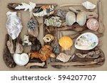 Seashell  Driftwood And Rock...