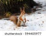 animals in wildlife. amazing... | Shutterstock . vector #594405977