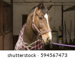 An Anted Horse In A Checkered...