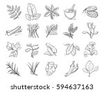 Vintage Hand Drawn Herbs And...