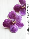 Small photo of Closeup of Vanda orchid flower