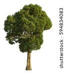 A Large Tree. Isolated On Whit...