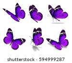 beautiful six monarch butterfly ... | Shutterstock . vector #594999287