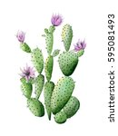 Flowering Cactus. Watercolor...