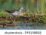 common greenshank   tringa... | Shutterstock . vector #595158833