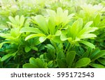 green leaf background | Shutterstock . vector #595172543
