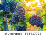 close up vine grapes in... | Shutterstock . vector #595417733