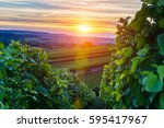 Champagne Vineyards At Sunset ...