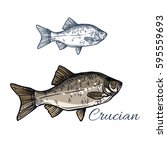 crucian sketch vector fish icon.... | Shutterstock .eps vector #595559693