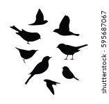 Vector Bird Silhouettes