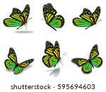beautiful six monarch... | Shutterstock . vector #595694603