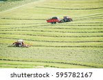 Small photo of Haymaking on a hillside with rows of hay, a hay tedder and a hay-loader