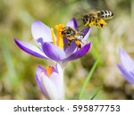 Flying Honeybee Pollinating A...