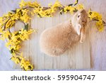 Stock photo easter bunny rabbit with yellow spring forsythia flowers on white textured floor and wooden board 595904747
