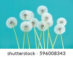 Dandelion Flower On Cyan Color...