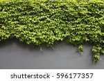 Background Wall With Ivy