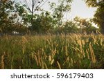 Natural Background Of Meadow O...