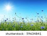 Blue Cornflowers In The Field...
