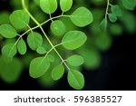 moringa oleifera  the most...