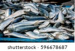 fresh batch of sardines | Shutterstock . vector #596678687