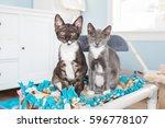 Two Kittens Posing