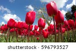 close up of field of beautiful... | Shutterstock . vector #596793527