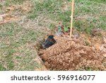 Small photo of small tree in soil afforestation action