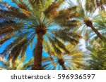 branches of date palms under... | Shutterstock . vector #596936597