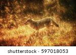 Sun Dance Coyote