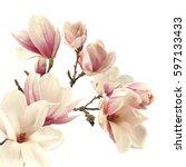 magnolia flower  | Shutterstock . vector #597133433