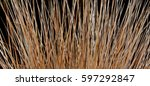 close up of withered ornamental ... | Shutterstock . vector #597292847