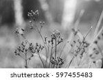 dry plant  blurred landscape... | Shutterstock . vector #597455483