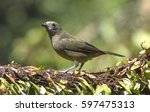 palm tanager perched on a branch | Shutterstock . vector #597475313