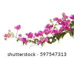 Bougainvilleas Isolated On...
