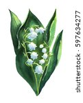 lily of the valley. watercolor... | Shutterstock . vector #597634277