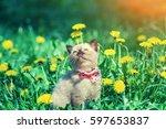 Stock photo little kitten wearing bow tie in the dandelion flowers 597653837