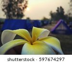 Closed Up Plumeria Flower With...