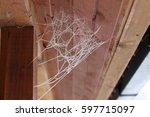 Frosty Cobweb In Winter