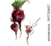 watercolor beet | Shutterstock . vector #597732827