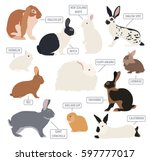 Stock vector rabbit lapin breed icon set flat design vector illustration 597777017