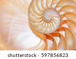 Nautilus Shell Symmetry Cross...
