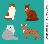 cat breed cute pet portrait... | Shutterstock .eps vector #597939293
