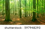 natural beech tree forest of... | Shutterstock . vector #597948293
