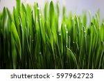new fresh small grass growth up ... | Shutterstock . vector #597962723
