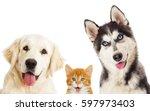 Stock photo puppy and kitten peeking out 597973403