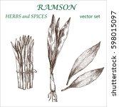 ramson.  botanical illustration.... | Shutterstock .eps vector #598015097