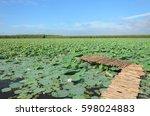 beautiful lotus garden in... | Shutterstock . vector #598024883