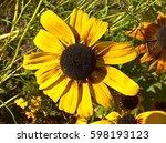Sunflower Ornamental Yellow....