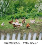 chickens in country yard | Shutterstock . vector #598242767